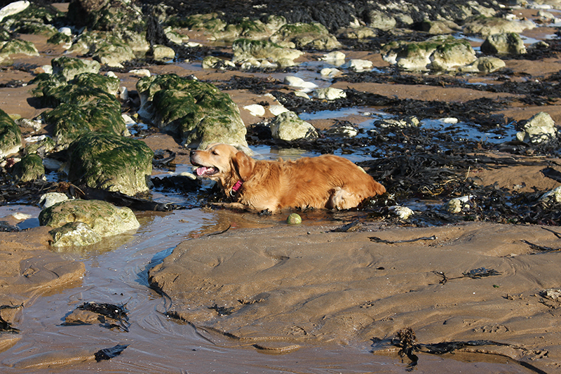 happy-dog-beach-broadstairs-botany-bay-sarah-blinco-travellivelearn