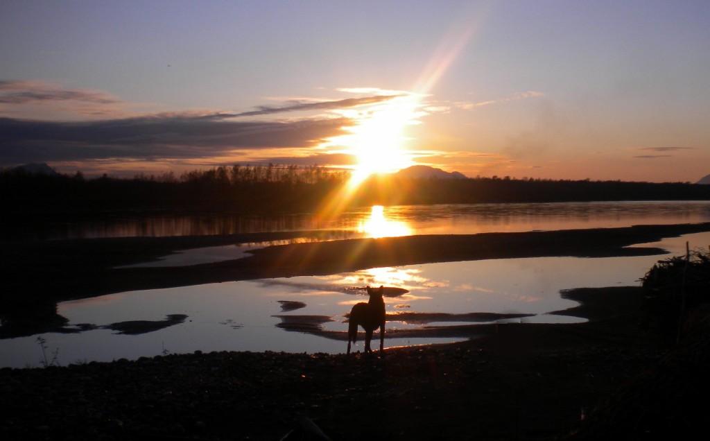 BC dog in wilderness Sarah Blinco travellivelearn