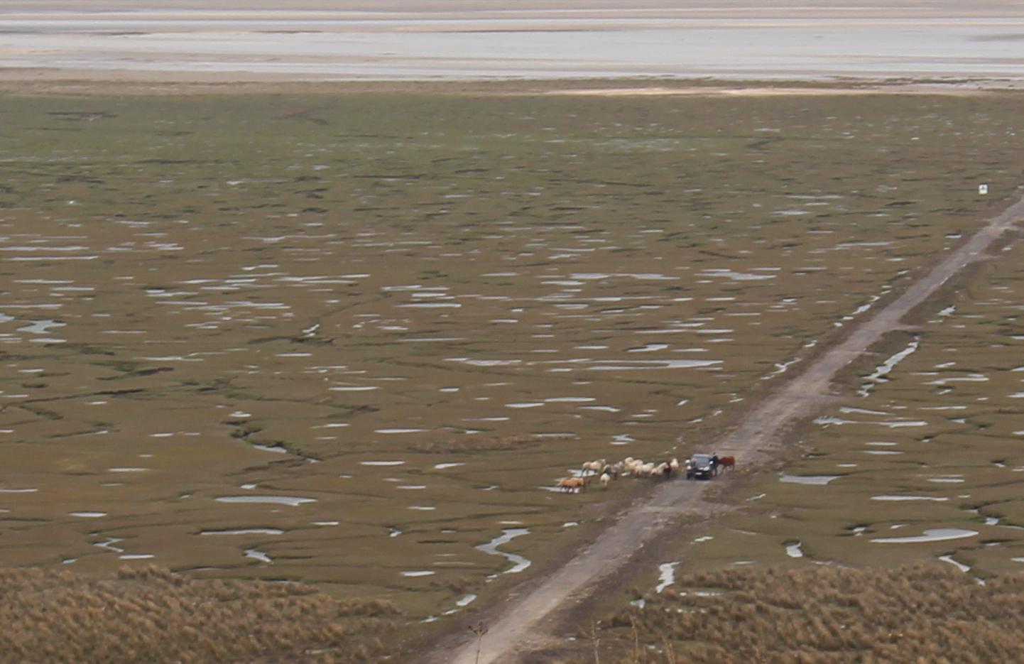Wales road trip - Welsh salt marshes
