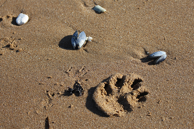 Days out in Kent: beach fun and paw prints