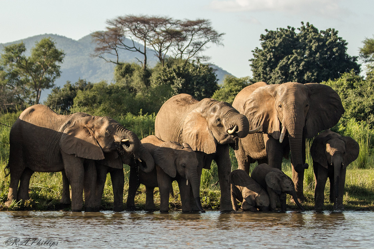 An expedition across southern Africa