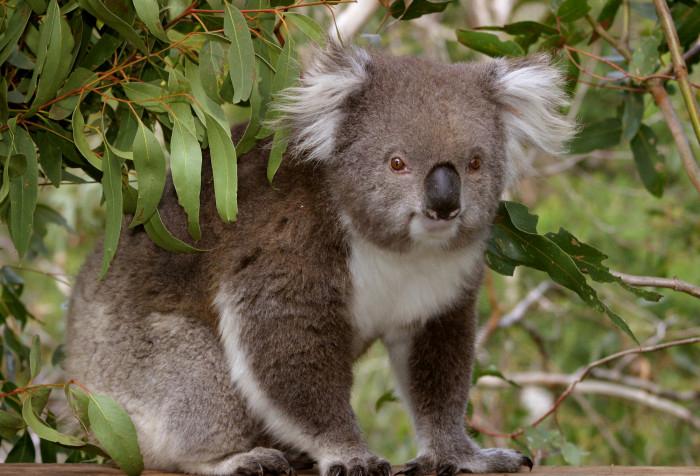 For the love of nature – Phillip Island Australia