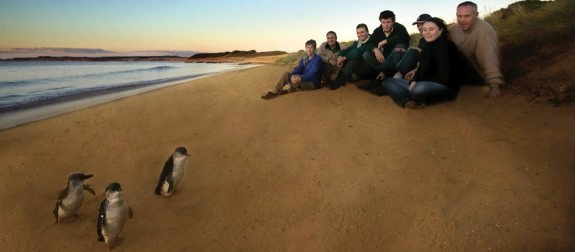 Phillip Island travel live learn penguins