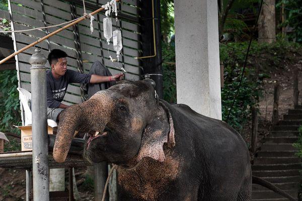 Elephant Conservation Thailand wildlife