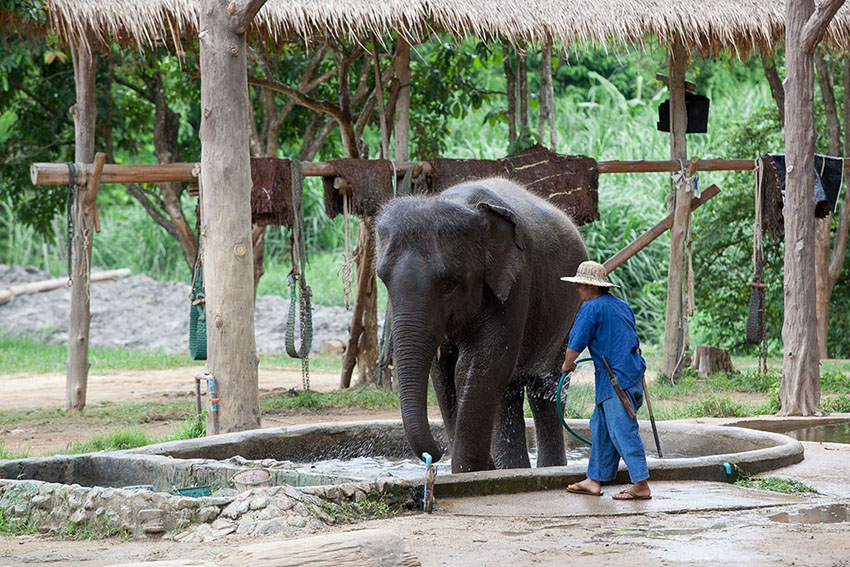 Thai Elephant Conservation Centre Lampang focussin on Thailand wildlife