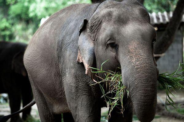 Tourism authority of thailand Thai Elephant cnservation Centre Lampang