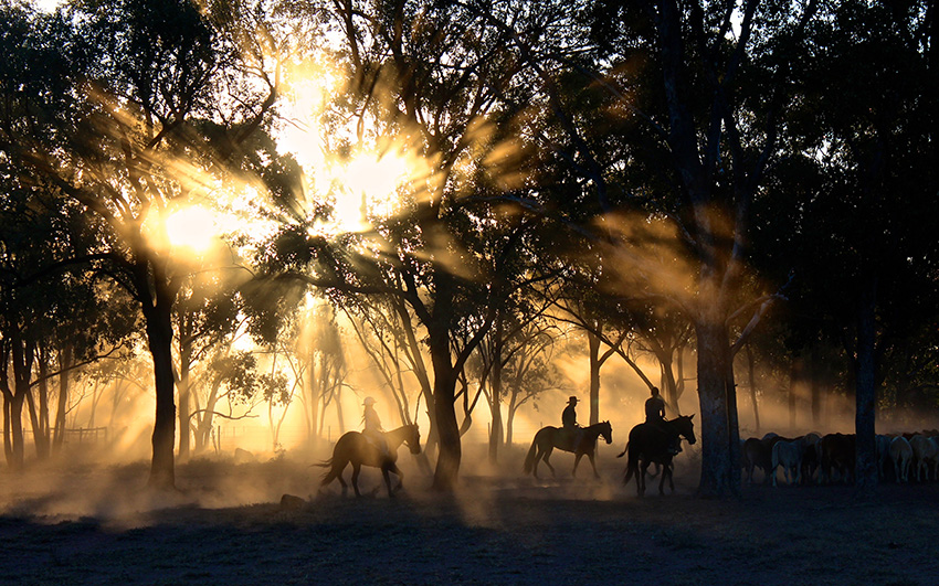 Experience the real Australian outback and many local experience when house sitting