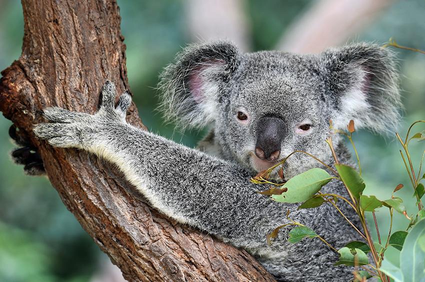 Meet our Aussie animals while house sitting