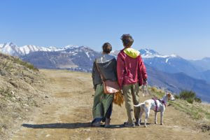 11 hacks for travelling with your dog
